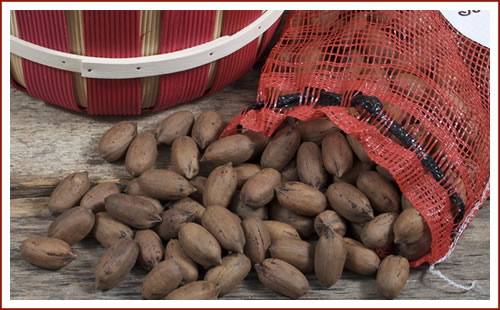 products-InShellPecans.jpg